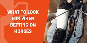 what to look for when betting on horses